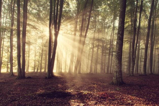 Lej et sommerhus i Klitmøller i din næste ferie